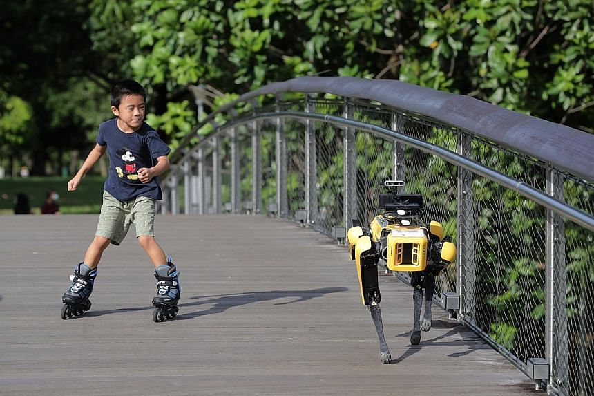 A four-legged robot patrolling Bishan-Ang Mo Kio Park last month to remind people about safe distancing by playing a recorded message, in a pilot trial by the National Parks Board and the Smart Nation and Digital Government Group. Robotics has been i
