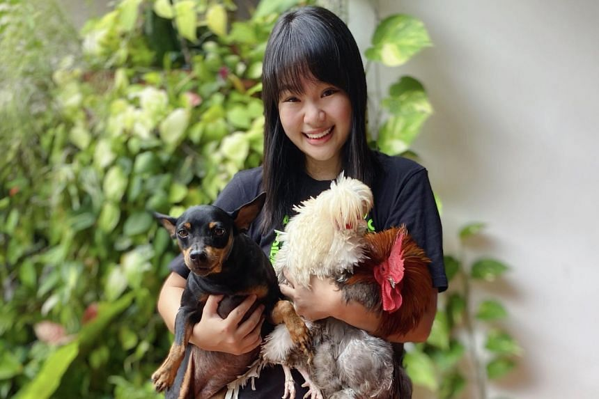 Business development manager Jayce Ho holds rooster that flies to the fence for hugs, another chicken and her dog Kiki.