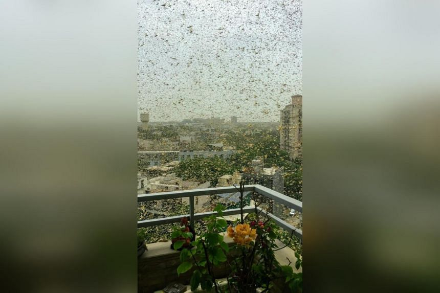 People posted pictures of the locusts on Twitter.