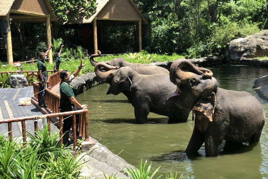 The Singapore Tourism Board announced that 13 attractions including the Singapore Zoo will be able to welcome guests.