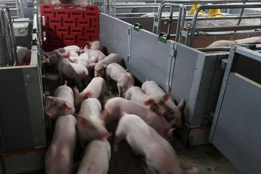 Named G4, the new swine flu is genetically descended from the H1N1 strain that caused a pandemic in 2009.