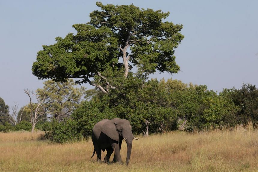 Hundreds of elephants die mysteriously in Botswana 'disaster'