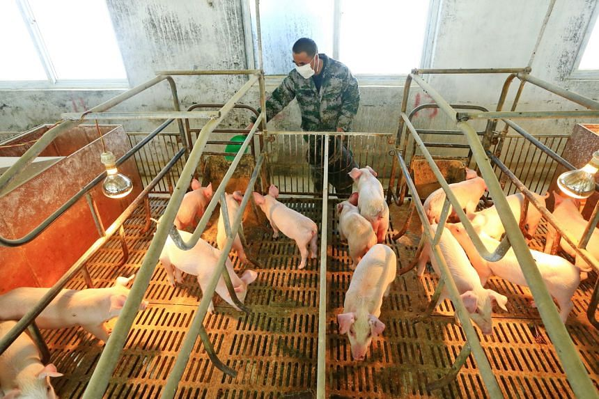 """The study had warned that a new swine flu virus could become a potential """"pandemic virus""""."""