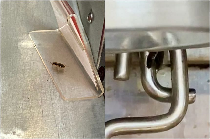 A customer had spotted cockroaches crawling all over a drink dispenser machine at a mookata restaurant at Golden Mile Complex.