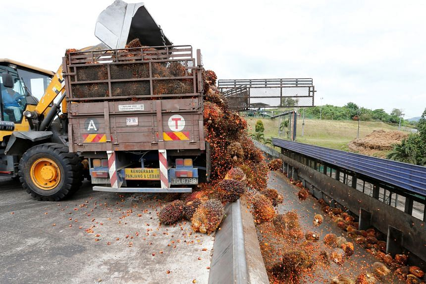 Malaysia is the world's second-largest palm oil producer and exporter.