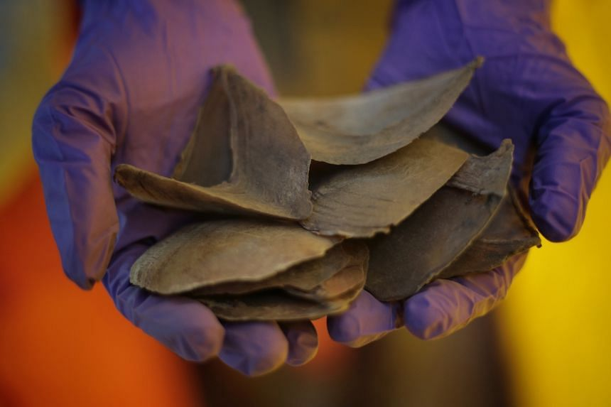Vietnam is an important destination in the Asian region for illegal wildlife products such as pangolin scales (pictured) and elephant ivory.