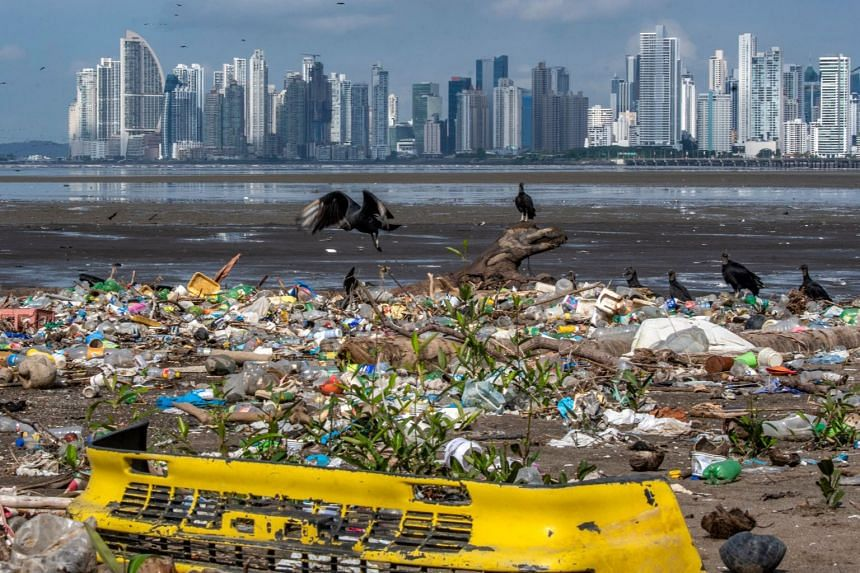 Vultures are seen over garbage, including plastic waste, on a beach in Panama City, on June 8, 2020, during the World Oceans Day.
