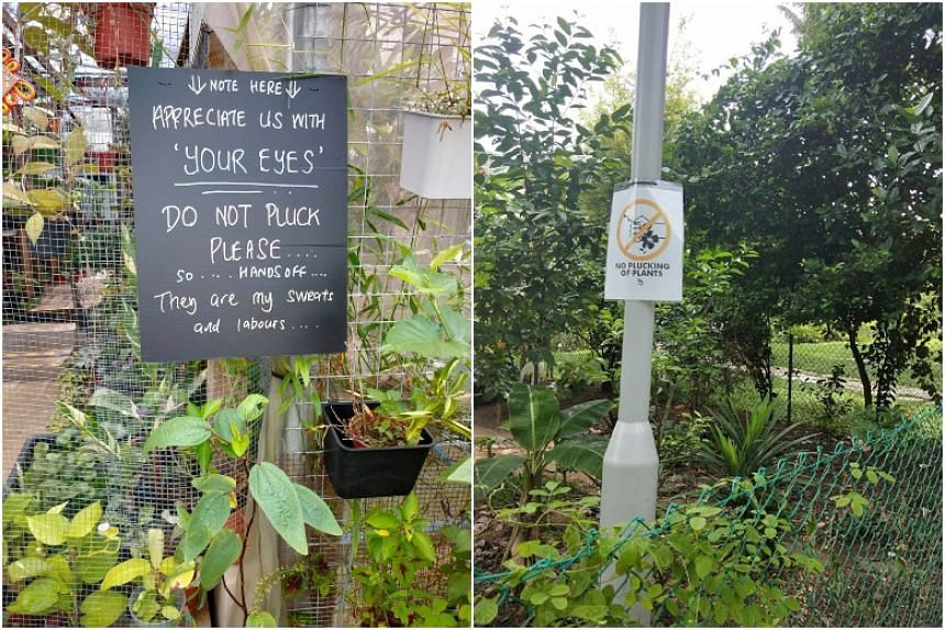 Despite new deterrents such as signs, thefts still happen in each garden at least once a month.