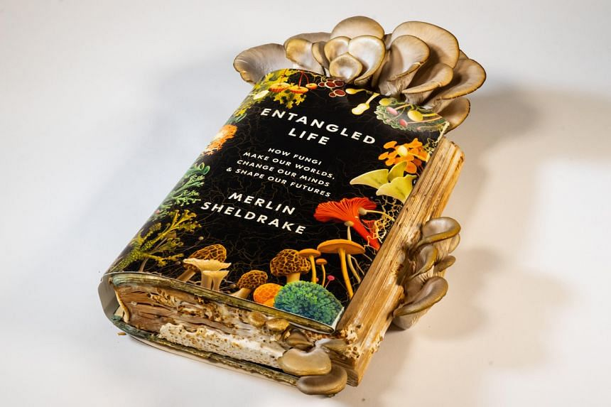 Upon receiving a copy of his debut book, Entangled Life, Dr Merlin Sheldrake seeded its pages with a kind of oyster mushroom.