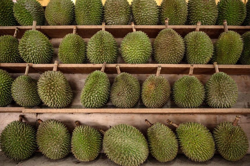 Durians in Malaysia can cost more than 60 ringgit a kilogram, with 137 officially registered varieties.