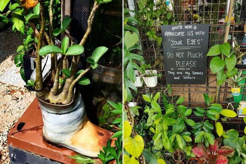 (Left) A desert rose plant that Mr Hamzah potted was stolen in February last year. (Right) One of the signs put up by Raymond Tang in the Social Innovation Park in Punggol.