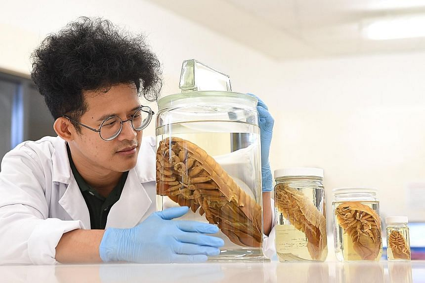 Mr Muhammad Dzaki Safaruan, a member of the 2018 deep sea biodiversity expedition in southern Java, with the Darth Vader isopod (in biggest jar) discovered during the voyage, as well as other isopods.