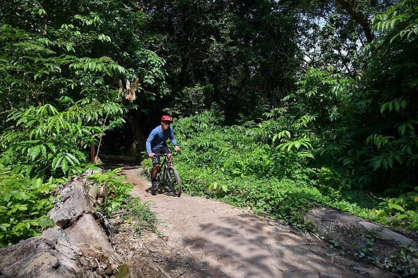 Chestnut Nature Park has mountain biking trails for cycling enthusiasts.