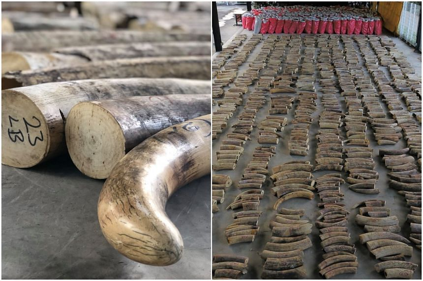 The ivory that is being destroyed comes from various sources and was seized over the years.