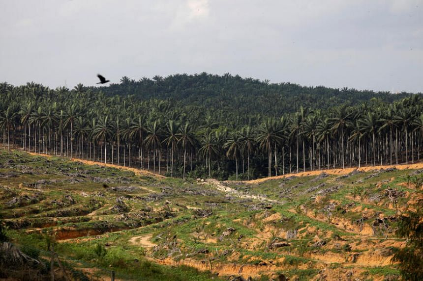 Land that has been cleared is pictured at an oil palm plantation in Johor, on Feb 26, 2019.
