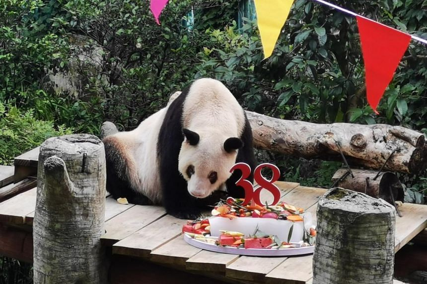 Xinxing the panda's age is equivalent to more than 110 human years.
