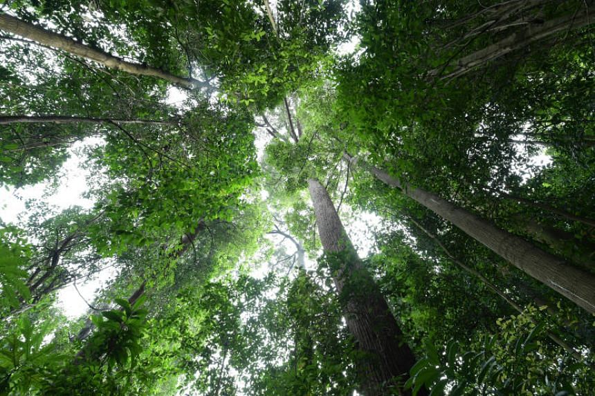 Reforestation has been touted as a relatively quick and easy fix for dealing with climate change.
