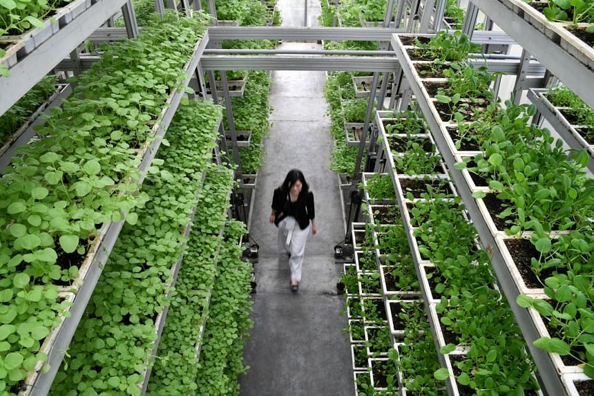 Skilled jobs will be created in the high-tech agriculture and aquaculture industry as Singapore looks to local production to increase its food security.