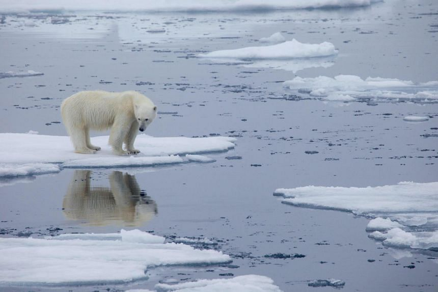 Polar Bear Kills Dutch Man in Norway's Arctic Svalbard Archipelago