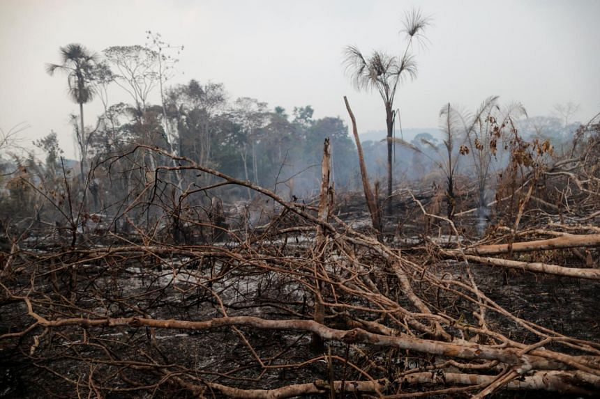 A burned tract of the Amazon jungle is cleared by loggers and farmers near Mirante da Serra on Aug 20, 2020.