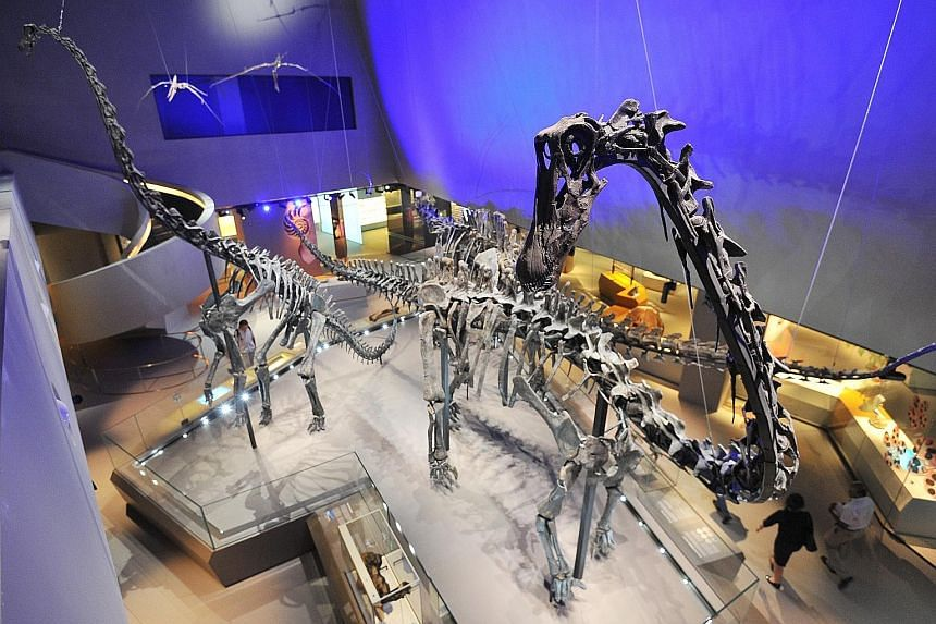 Exhibits at the Lee Kong Chian Natural History Museum include those of a sperm whale skeleton and a trio of dinosaur skeletons (above). The museum is planning a digital database and management system of its more than one million specimens and artefac