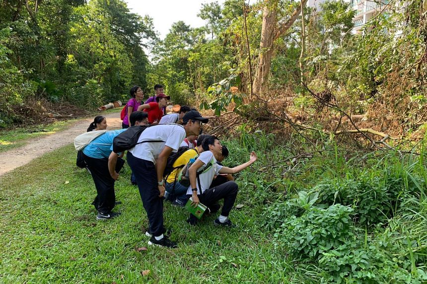 Five Hwa Chong Institution students who formed Project Cynefin to raise awareness on Singapore's wildlife won Student of the Year at the new NParks Community in Nature Schools Award.