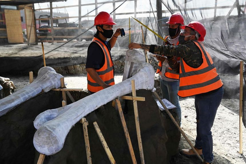 The remains of dozens of mammoths and other prehistoric creatures have been found in Zumpango on the northern edge of Mexico City.