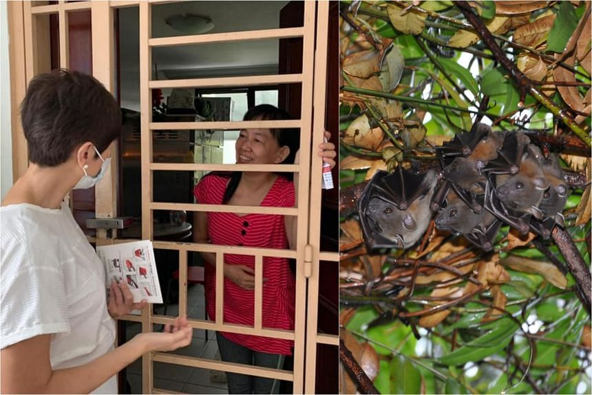Manpower Minister Josephine Teo said NParks officers taught the residents how to deter bats from flying into their units.