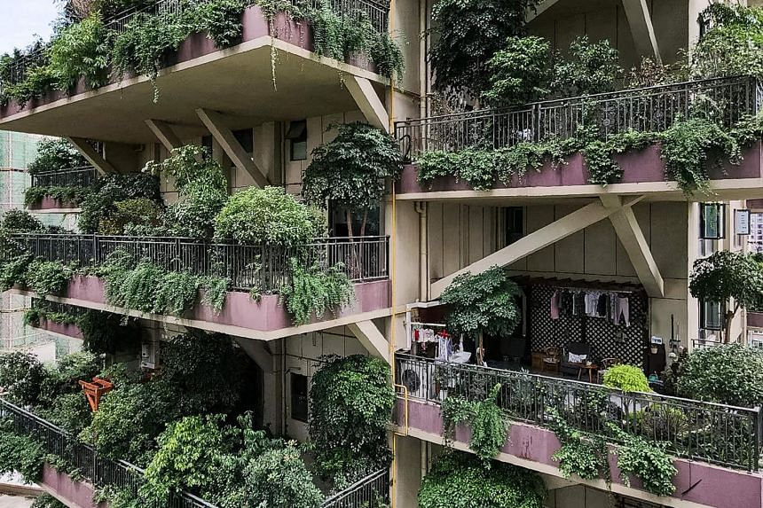 Plants have almost entirely swallowed up some neglected balconies, with branches hanging over railings all over the towers.
