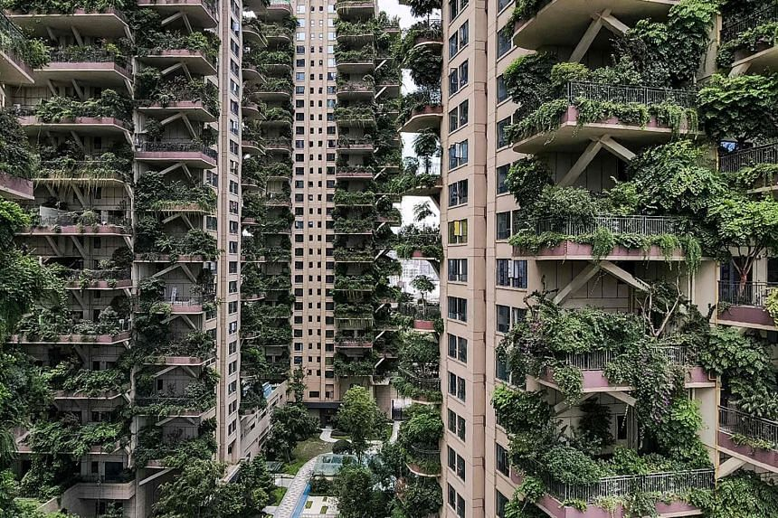 Without any tenants to care for the gardens, the eight towers have been overrun by their own plants and invaded by mosquitoes.