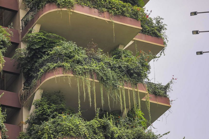 Plants have almost entirely swallowed up some neglected balconies.