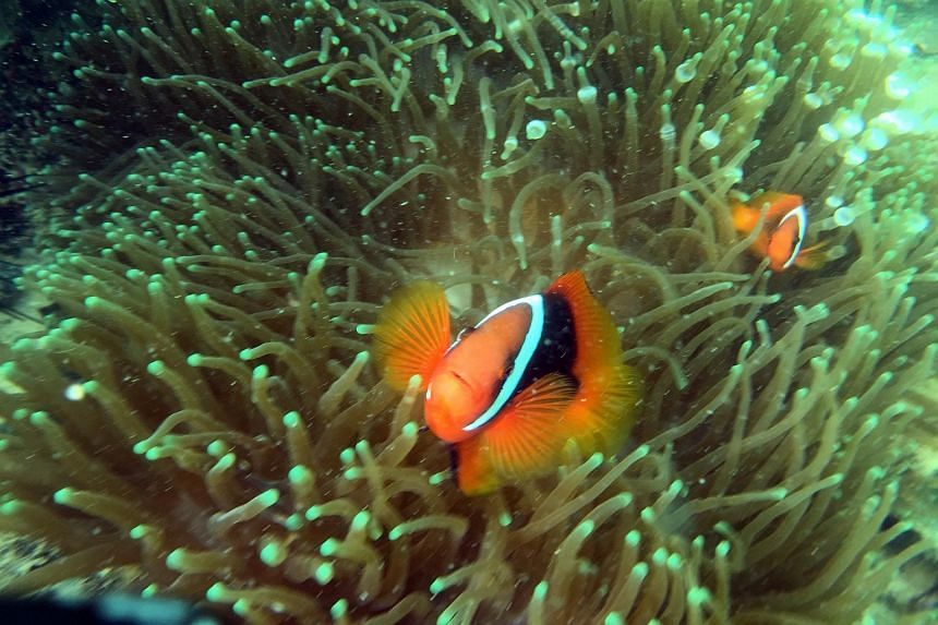 There is plenty to see on a dive at Pulau Hantu, including fish, coral, nudibranchs of all shapes and colours, sea horses and other sea critters.