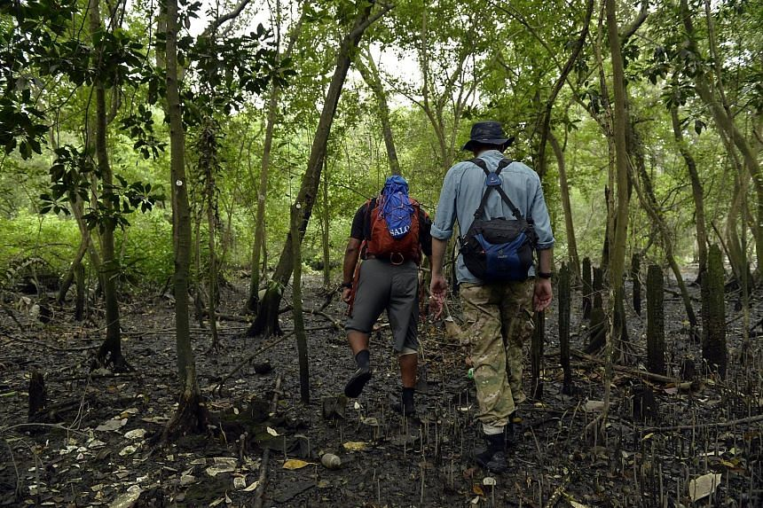 A 2013 file photo of biology lecturer N. Sivasothi (left) and mangrove expert Dan Friess, both from the National University of Singapore, at a mangrove area in Mandai.