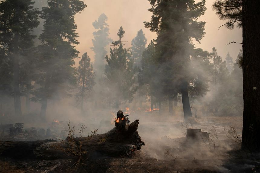 Trees lie burning in the Fremont National Forest in the outskirts of Oregon, US on Sept 17, 2020.