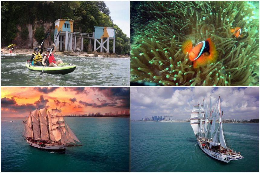 (Clockwise from top left) Kayaking near Tanjong Rimau, sea critters off Pulau Hantu, exploring Singapore's waters and romantic dining in the luxury tall ship Royal Albatross.