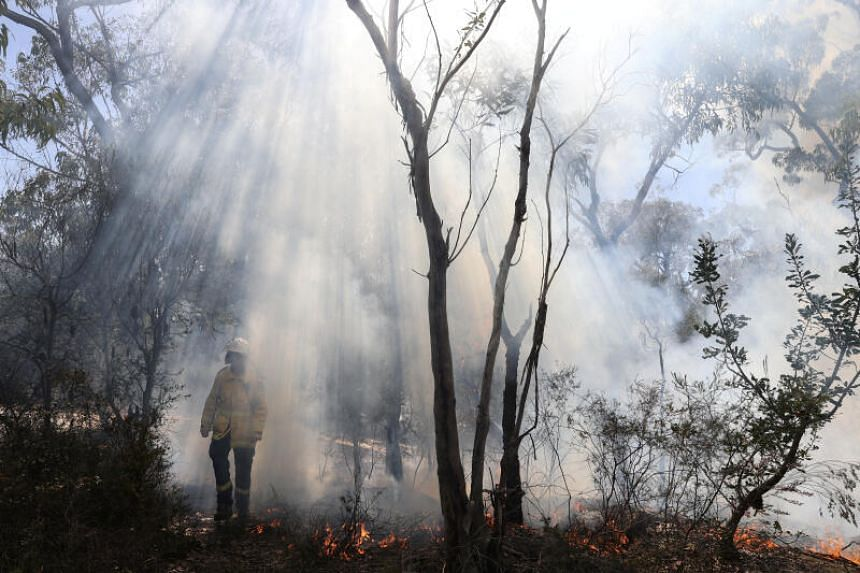 The fires burnt about 8 million ha of forests and farmland in an unusually long fire season lasting more than six months.