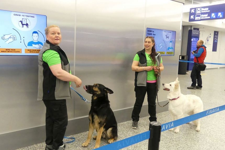 Sniffer dogs Valo (left) and ET, being trained to detect coronavirus are seen in Helsinki Airport.