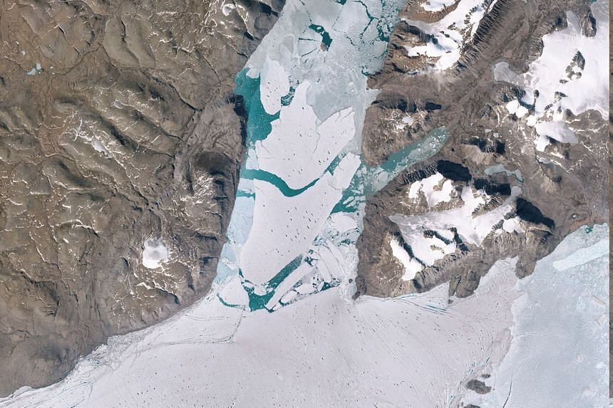 A segment of the largest ice shelf in the Arctic breaking off from June 29 to July 24. A new study says a rise in the earth's average surface temperature by another 1 deg C will lock in 2.5m of sea level rise from Antarctica alone.