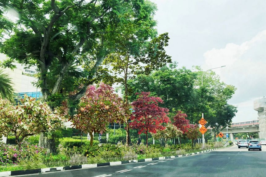 Artist's impression of the future Nature Way along Upper Changi Road East.
