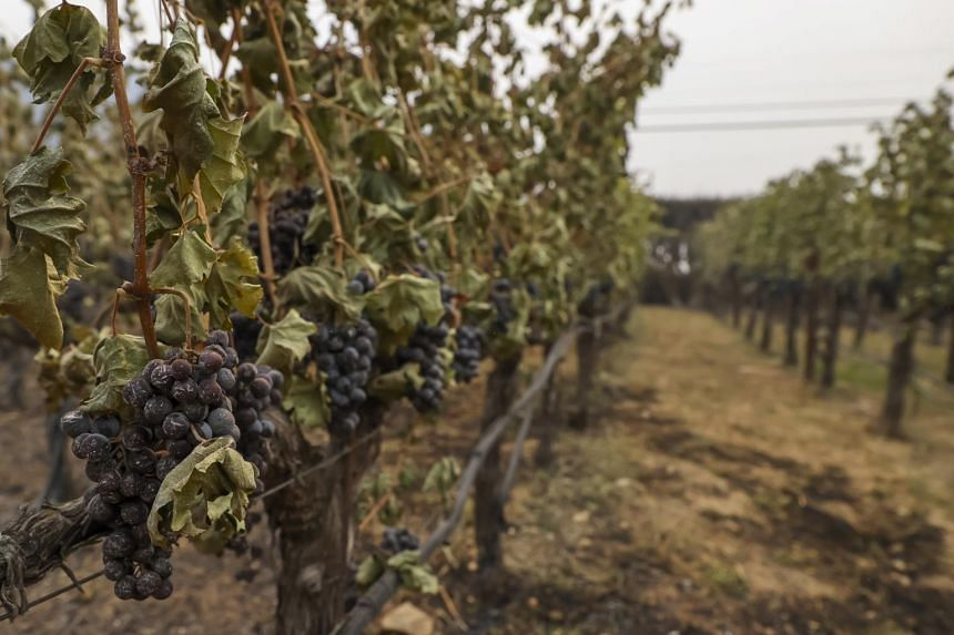 At least a dozen Napa wineries and vineyards were burned.