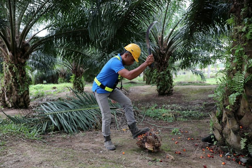 The United States is a key market for the firm in the world's second largest producer and exporter of palm oil.