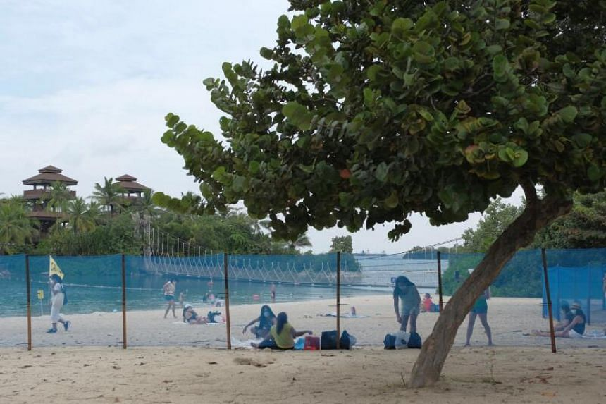 A blue fence separating different parts of Palawan beach into zones, with visitors not allowed to cross between them.