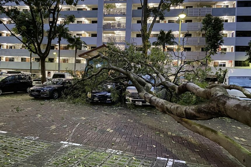 The tree fell at 5am on Oct 11, 2020, after a heavy downpour.