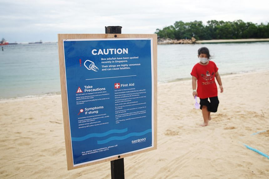 A sign warning beachgoers about the box jellyfish threat at Siloso Beach. Some species have highly venomous stings that could be fatal.