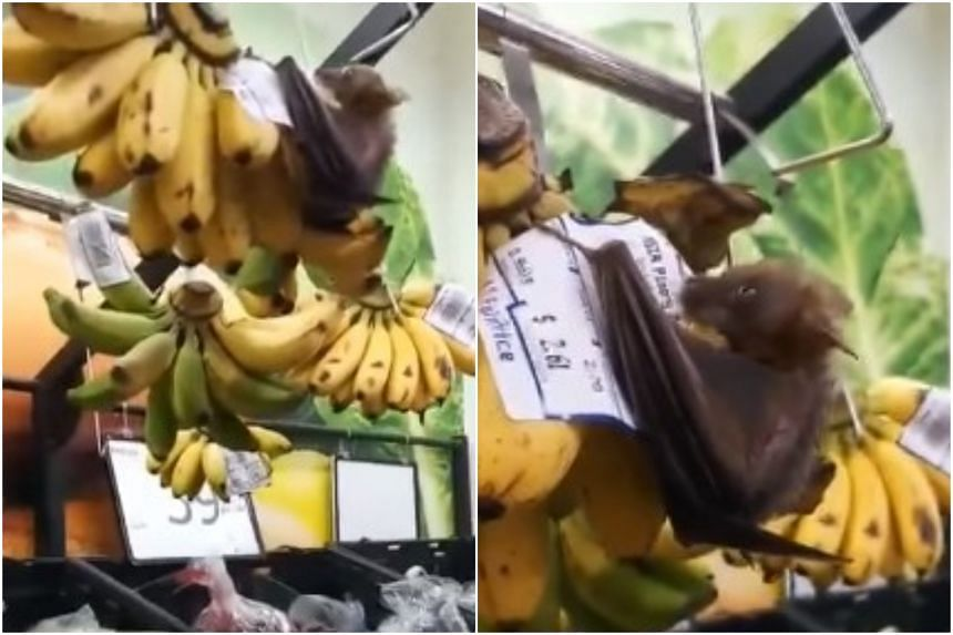 NTUC FairPrice has contacted the authorities to look into the cause of the presence of bats in the area.