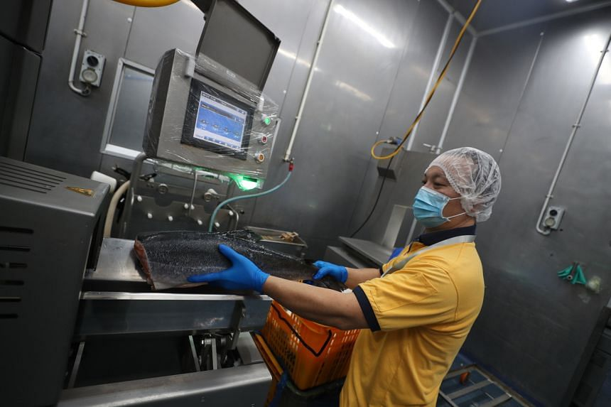 Hai Sia Seafood staff using the salmon filleting machine before they are de-boned and cut into portions for packaging.