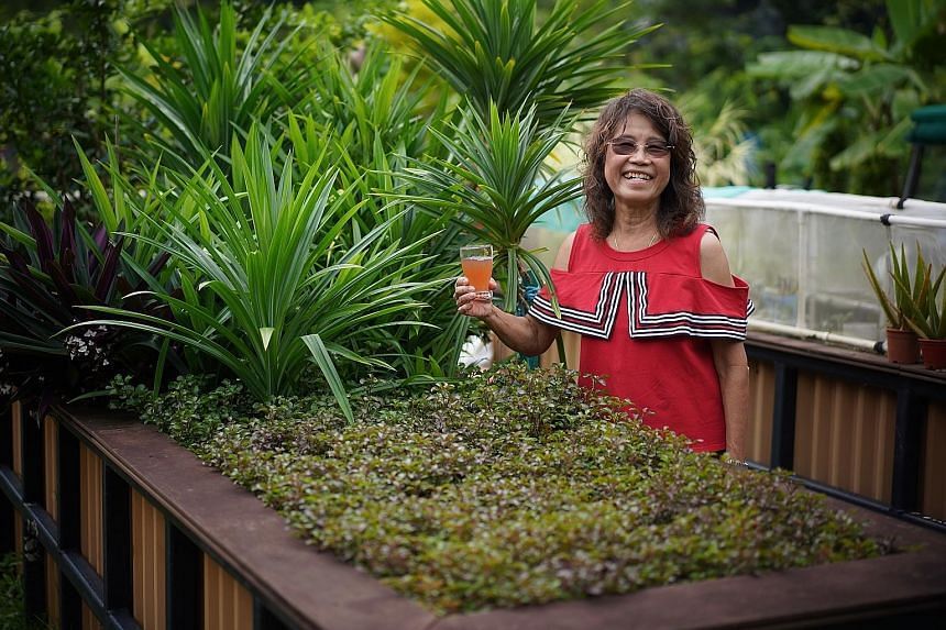 Allotment gardener Emily Fong, a retiree in her 60s, will helm a live chat on how to create a good allotment garden on Sunday at 2pm. She has been tending to her allotment plot in HortPark for the last four years, harvesting bumper crops of Thai wate