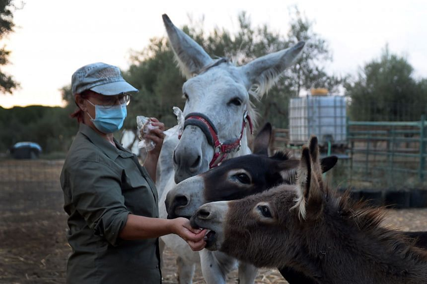 El Burrito Feliz is an association offering free donkey therapy sessions to medics fighting the virus.
