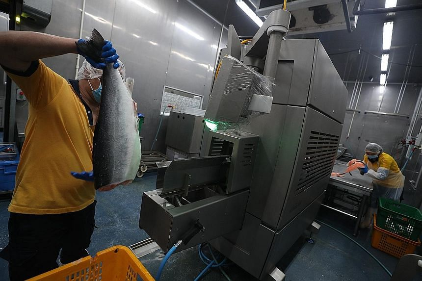 Hai Sia Seafood staff using a fish filleting machine that reduces reliance on intensive labour, while helping staff improve their skills. Instead of filleting fish by hand, workers learn to operate the equipment, track yields and focus on quality con