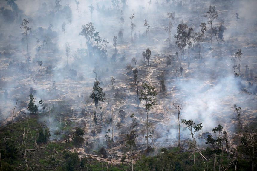 "Greenpeace said Indonesia's new jobs creation law is ""rolling out a red carpet"" for more deforestation."
